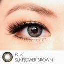 New Softlens Eos Sunflower Softlens Brown