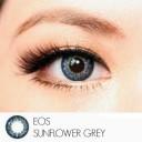 New Softlens Eos Sunflower Softlens Grey